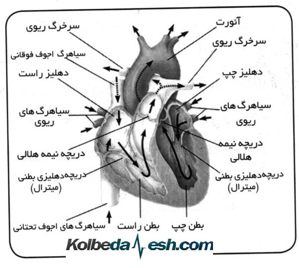 Photo of مقاله فشار خون